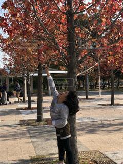 木の隣に歩道に立っている人の写真・画像素材[847226]