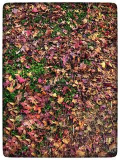 緑の草のボックスの写真・画像素材[869025]