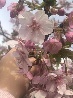公園,花,春,フラワー,枝