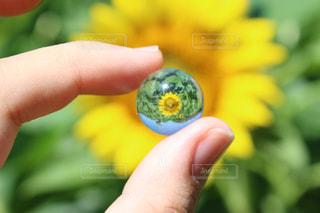 向日葵日の丸構図🇯🇵の写真・画像素材[1208766]