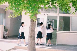 学校 × 緑の写真・画像素材[1242638]