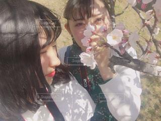 風景,空,花,桜,カメラ女子,屋外,女子,少女,お花見,人物,人,高校生,広島,高校,尾道