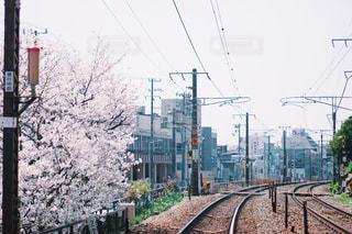 空,花,桜,屋外,電車,線路,お花見,広島,尾道