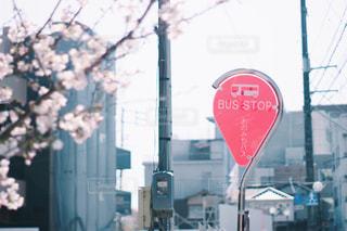 空,花,桜,屋外,お花見,広島,尾道,バス停