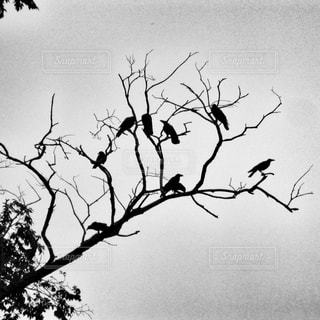 群れるカラスの写真・画像素材[841860]