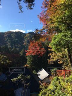 飯盛山から見下ろす景色の写真・画像素材[877339]