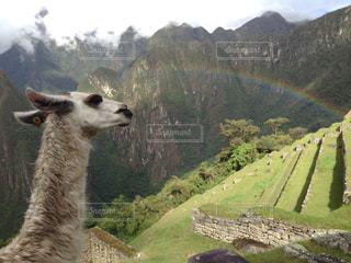 虹とマチュピチュとリャマの写真・画像素材[829967]