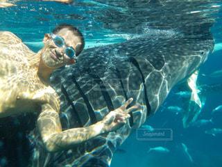 ジンベイザメと一緒に泳ぐの写真・画像素材[830039]