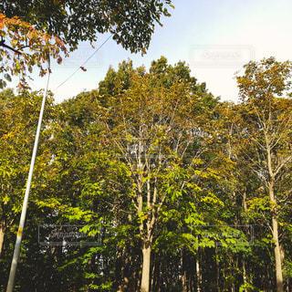 秋,木,晴れ,景観,フォトジェニック,色・表現