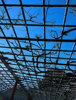 藤棚の間からのぞく青空の写真・画像素材[1112692]