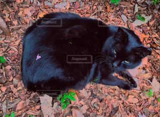黒猫の背中にハートの花びらの写真・画像素材[1114629]