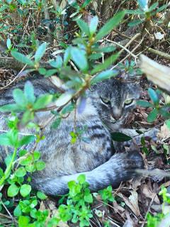 猫の写真・画像素材[1289356]
