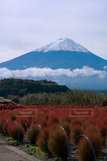 秋,富士山,コキア
