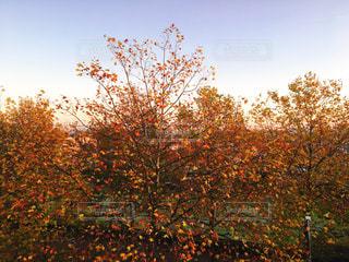 フォレスト内のツリーの写真・画像素材[851248]