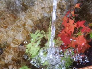 水の中の紅葉 - No.840882