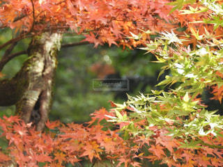 木の枝に座っている鳥 - No.850880