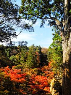 森の大きな木 - No.871197