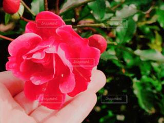 近くの花のアップ - No.899503