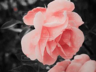 近くの花のアップ - No.899508