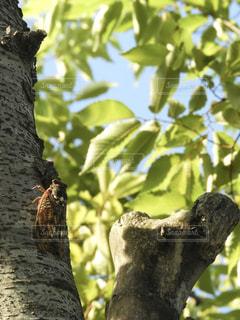夏,木,青空,葉,セミ,蝉,暑さに負けるな