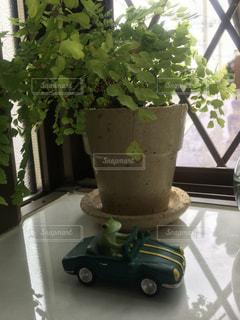 インテリア,緑,車,室内,観葉植物,カエル