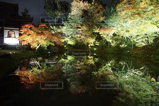 紅葉,京都,高台寺