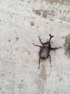 カブト虫のカブカブ♡の写真・画像素材[1374127]