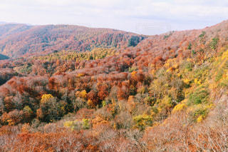 背景の山の茂みのグループの写真・画像素材[842952]