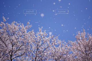 春なのに雪の写真・画像素材[852365]