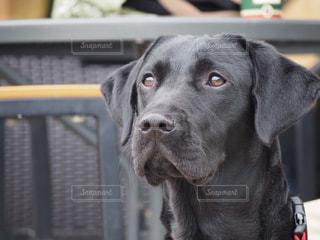 愛犬の写真・画像素材[1686235]