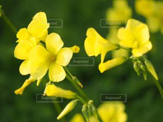 公園,花,春,綺麗,黄色,可愛い,花壇,エリカ