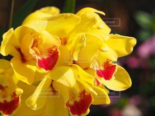 公園,花,春,綺麗,黄色,可愛い,花壇,草木,シンピジューム