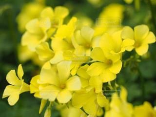 公園,花,春,綺麗,黄色,鮮やか,可愛い,花壇,鮮明,エリカ