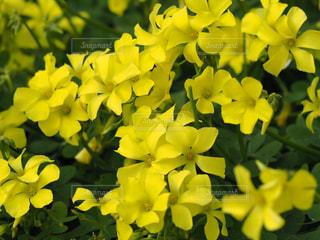 風景,花,春,屋外,綺麗,鮮やか,可愛い,花壇,鮮明,草木,エリカ