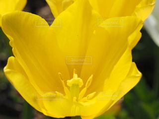 公園,花,綺麗,黄色,チューリップ,鮮やか,花壇,鮮明,雄しべ,雌しべ