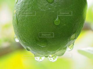 緑と水滴の芸術の写真・画像素材[3207979]