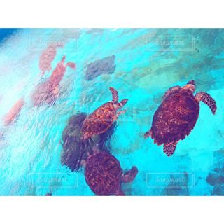 水族館,沖縄,旅行,ウミガメ,美ら海水族館,亀