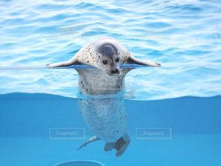 動物の写真・画像素材[1347634]
