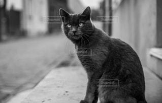 猫の写真・画像素材[834082]