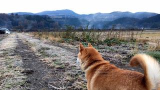 遠くを見つめる犬の写真・画像素材[976302]