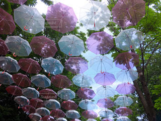 自然,空,傘,屋外,ピンク,森,白,カラフル,鮮やか,色,ビニール傘,フォトジェニック