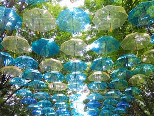 自然,空,傘,屋外,森,カラフル,青,黄色,水色,色,黄,ビニール傘,フォトジェニック
