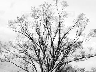 大きな木の写真・画像素材[854146]