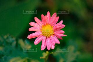 可愛い花 - No.872638