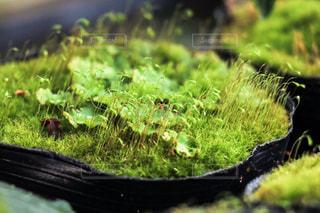 モコモコな苔の写真・画像素材[873314]