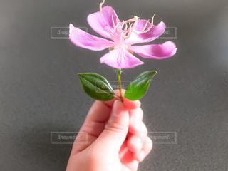 花を持っている手 - No.901070