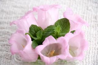 花,ピンク,ミント,カンパニュラ