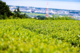 お茶畑の写真・画像素材[965965]