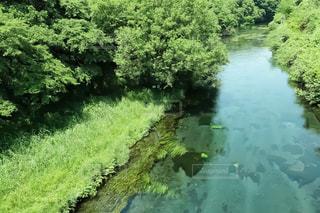 綺麗な川の写真・画像素材[966102]