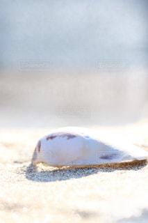 海,砂浜,貝